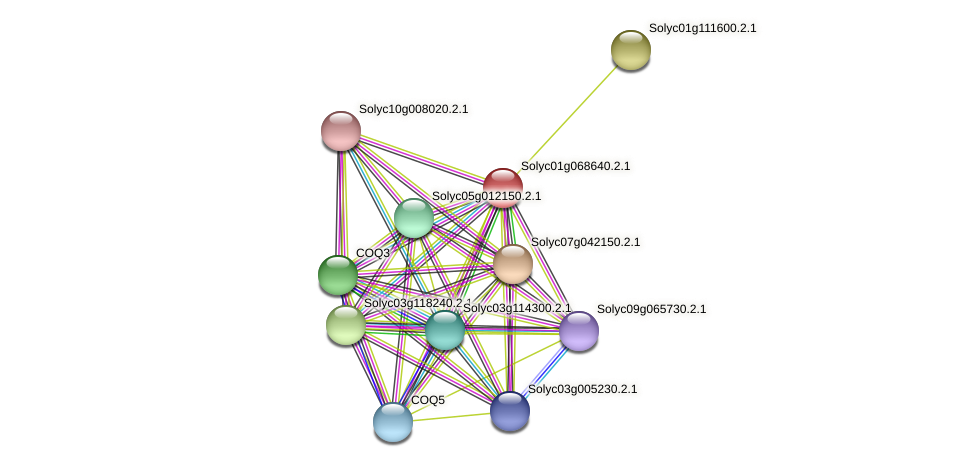 Solyc01g068640.2.1 protein (Solanum lycopersicum) - STRING interaction network