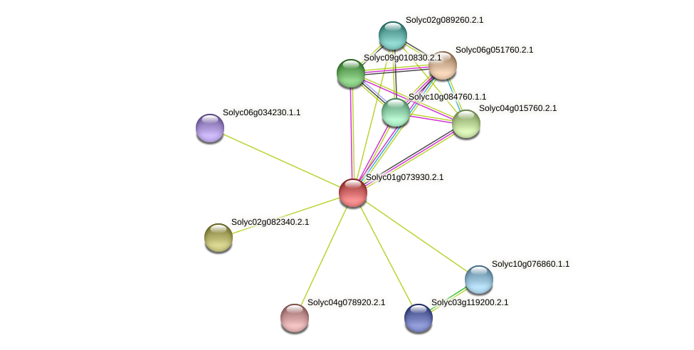 Solyc01g073930.2.1 protein (Solanum lycopersicum) - STRING interaction network