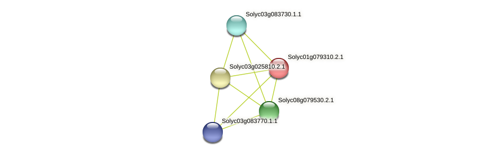 Solyc01g079310.2.1 protein (Solanum lycopersicum) - STRING interaction network