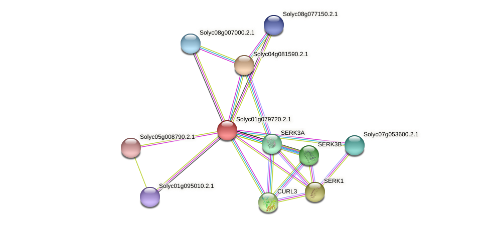 Solyc01g079720.2.1 protein (Solanum lycopersicum) - STRING interaction network