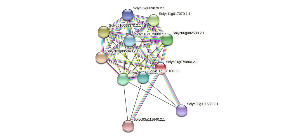 Solyc01g079800.2.1 protein (Solanum lycopersicum) - STRING interaction network