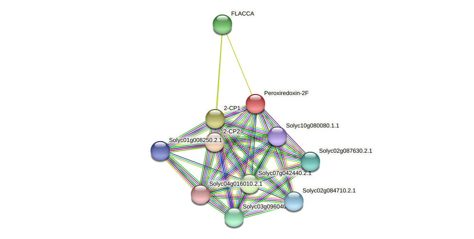 Solyc01g079820.2.1 protein (Solanum lycopersicum) - STRING interaction network