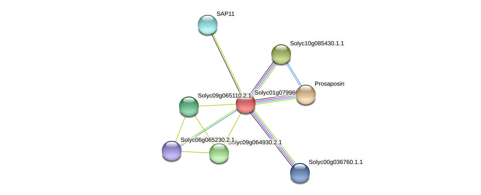Solyc01g079960.2.1 protein (Solanum lycopersicum) - STRING interaction network