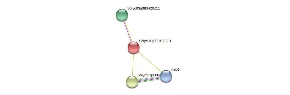 Solyc01g080190.2.1 protein (Solanum lycopersicum) - STRING interaction network