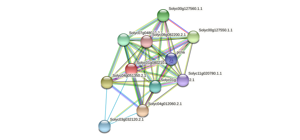 Solyc01g080210.2.1 protein (Solanum lycopersicum) - STRING interaction network