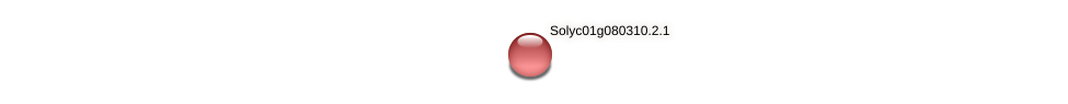 Solyc01g080310.2.1 protein (Solanum lycopersicum) - STRING interaction network