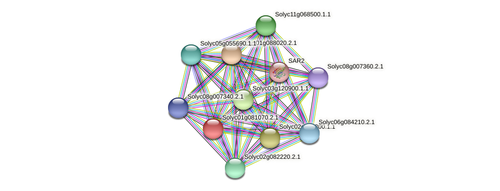 Solyc01g081070.2.1 protein (Solanum lycopersicum) - STRING interaction network