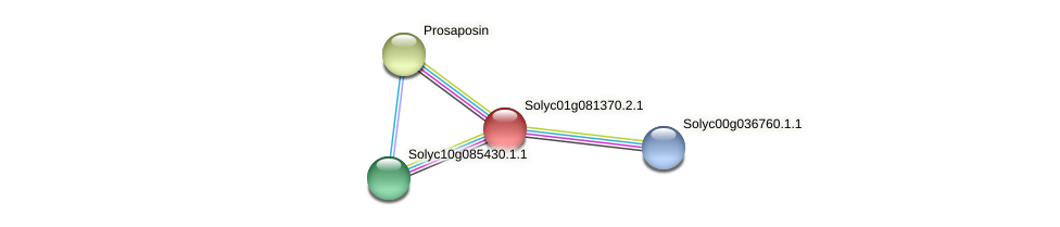 Solyc01g081370.2.1 protein (Solanum lycopersicum) - STRING interaction network