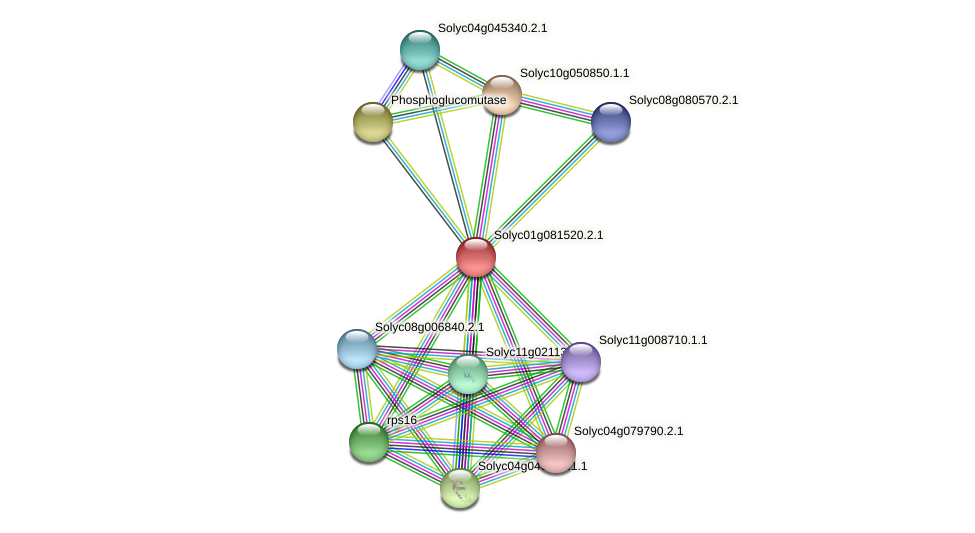 101263844 protein (Solanum lycopersicum) - STRING interaction network