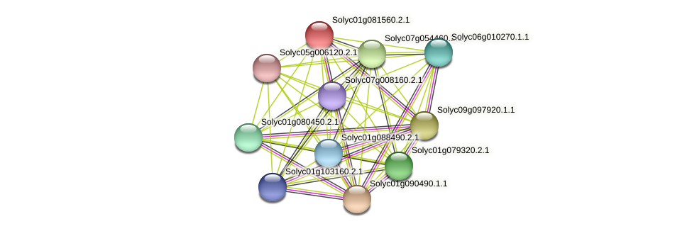 Solyc01g081560.2.1 protein (Solanum lycopersicum) - STRING interaction network