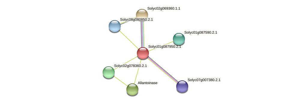 Solyc01g087950.2.1 protein (Solanum lycopersicum) - STRING interaction network