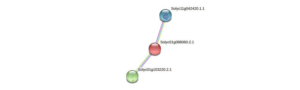Solyc01g088060.2.1 protein (Solanum lycopersicum) - STRING interaction network