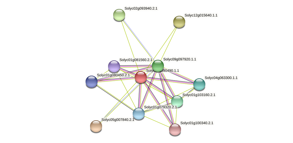 Solyc01g090490.1.1 protein (Solanum lycopersicum) - STRING interaction network