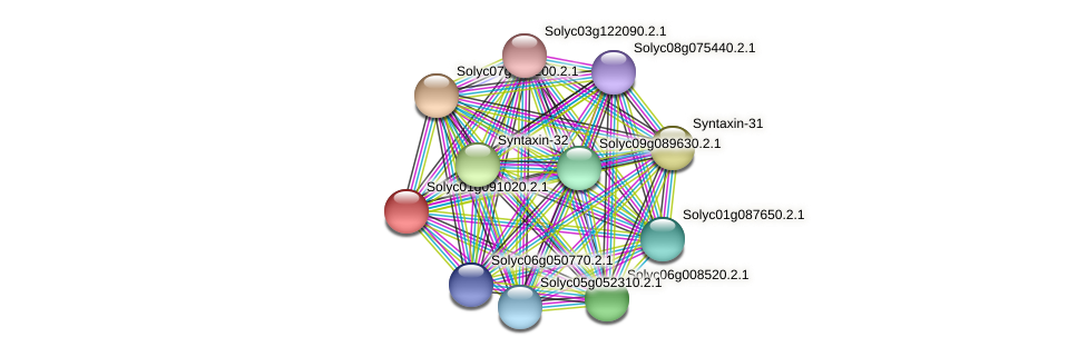 Solyc01g091020.2.1 protein (Solanum lycopersicum) - STRING interaction network