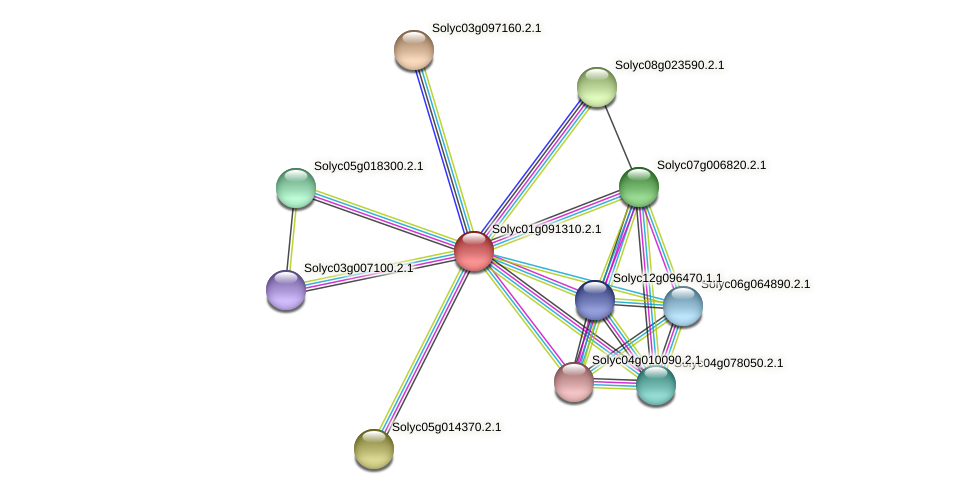 Solyc01g091310.2.1 protein (Solanum lycopersicum) - STRING interaction network