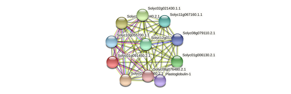 Solyc01g091450.2.1 protein (Solanum lycopersicum) - STRING interaction network