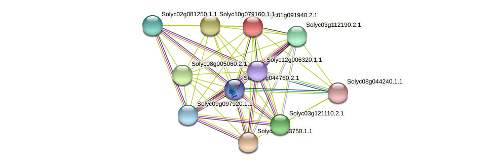 Solyc01g091940.2.1 protein (Solanum lycopersicum) - STRING interaction network