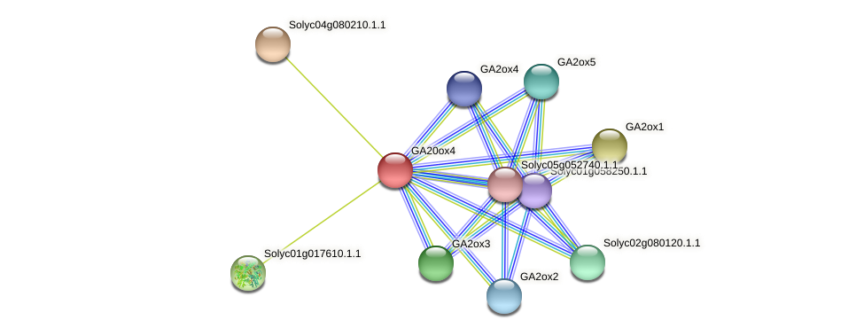 GA20ox4 protein (Solanum lycopersicum) - STRING interaction network