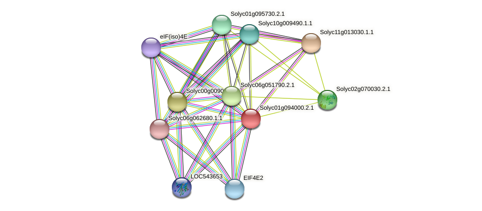 Solyc01g094000.2.1 protein (Solanum lycopersicum) - STRING interaction network