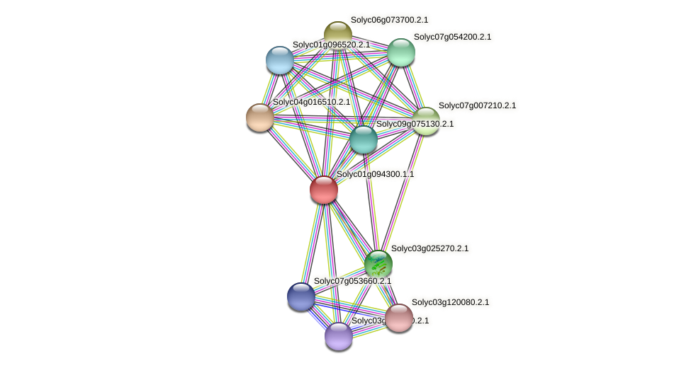 Solyc01g094300.1.1 protein (Solanum lycopersicum) - STRING interaction network