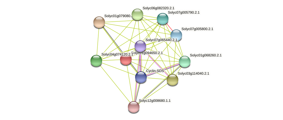 101262968 protein (Solanum lycopersicum) - STRING interaction network