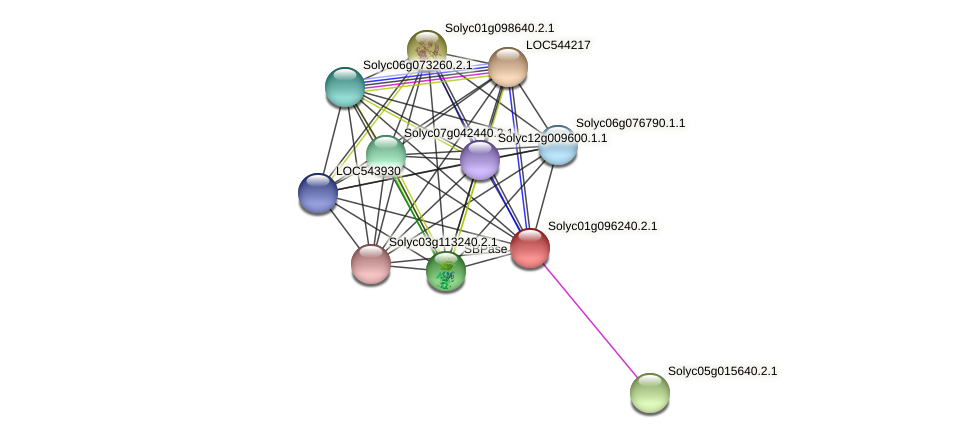 Solyc01g096240.2.1 protein (Solanum lycopersicum) - STRING interaction network