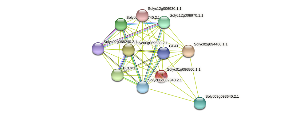 101251231 protein (Solanum lycopersicum) - STRING interaction network