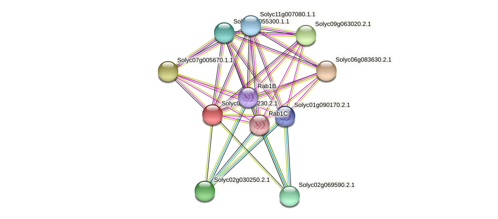 Solyc01g097230.2.1 protein (Solanum lycopersicum) - STRING interaction network