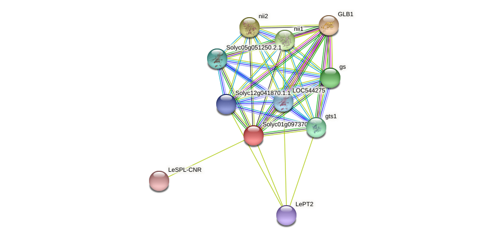 Solyc01g097370.1.1 protein (Solanum lycopersicum) - STRING interaction network
