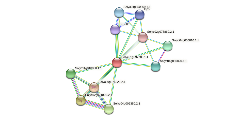 Solyc01g097780.1.1 protein (Solanum lycopersicum) - STRING interaction network