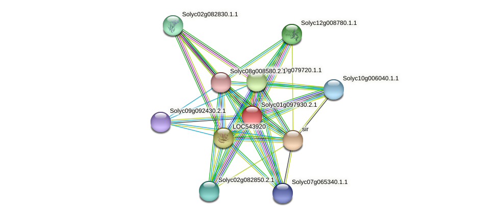 Solyc01g097930.2.1 protein (Solanum lycopersicum) - STRING interaction network