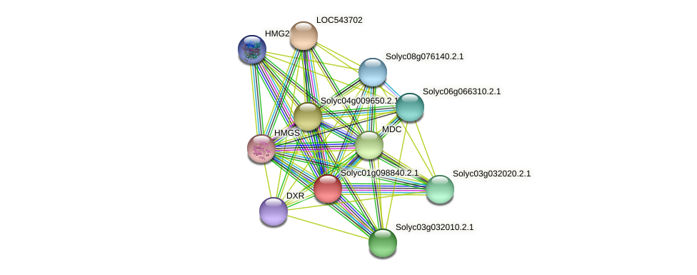 Solyc01g098840.2.1 protein (Solanum lycopersicum) - STRING interaction network
