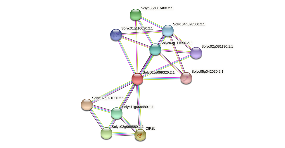 Solyc01g099320.2.1 protein (Solanum lycopersicum) - STRING interaction network