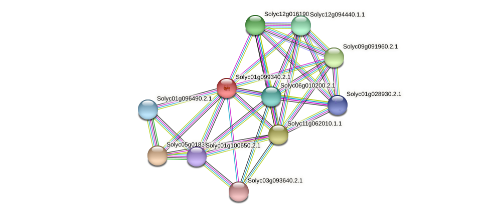 Solyc01g099340.2.1 protein (Solanum lycopersicum) - STRING interaction network