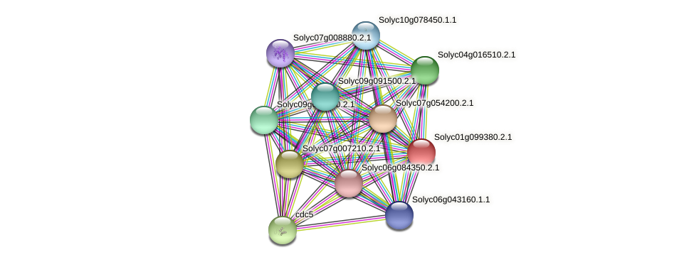 Solyc01g099380.2.1 protein (Solanum lycopersicum) - STRING interaction network