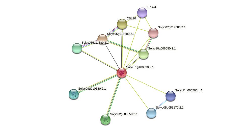 Solyc01g100390.2.1 protein (Solanum lycopersicum) - STRING interaction network