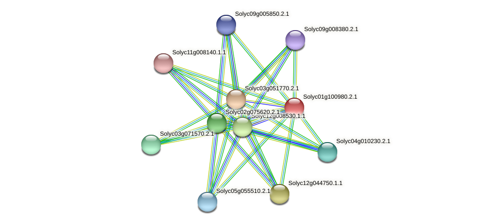 101259291 protein (Solanum lycopersicum) - STRING interaction network