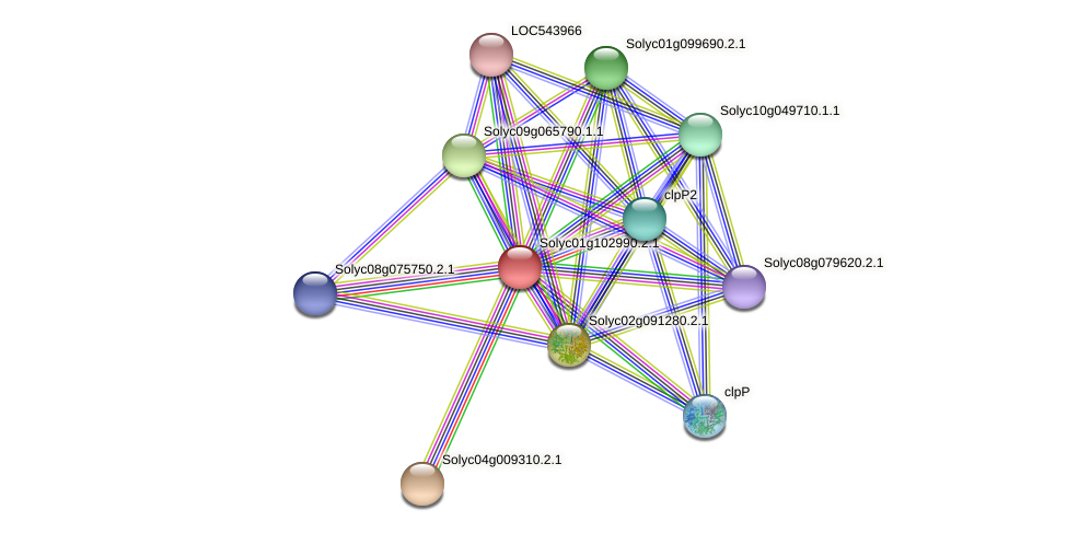 Solyc01g102990.2.1 protein (Solanum lycopersicum) - STRING interaction network