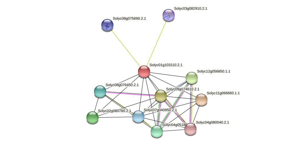 101258197 protein (Solanum lycopersicum) - STRING interaction network