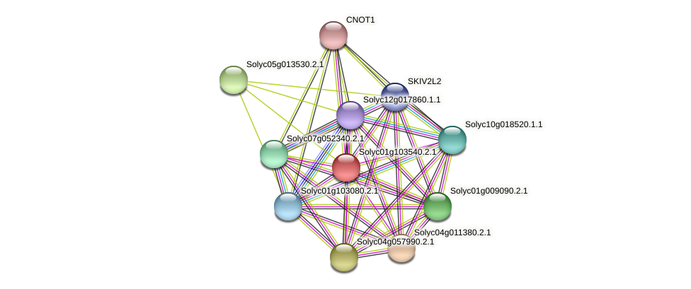 Solyc01g103540.2.1 protein (Solanum lycopersicum) - STRING interaction network
