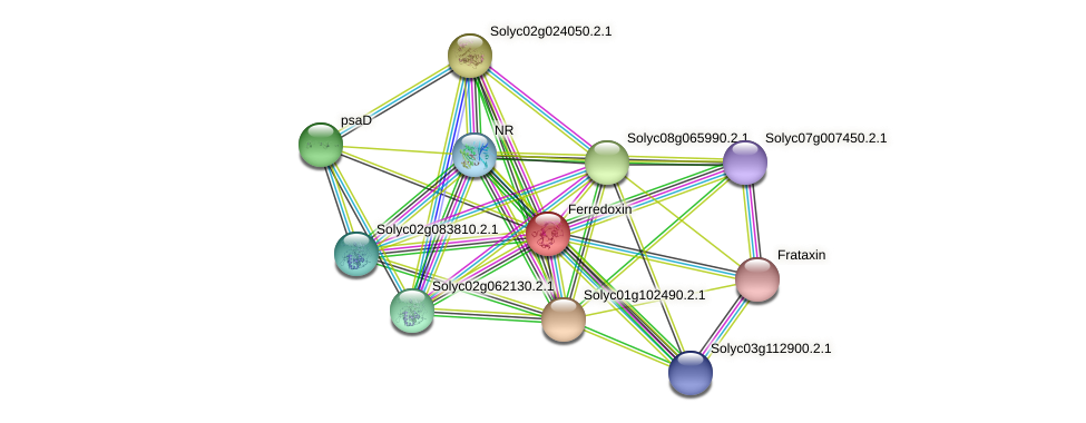 Solyc01g103920.2.1 protein (Solanum lycopersicum) - STRING interaction network
