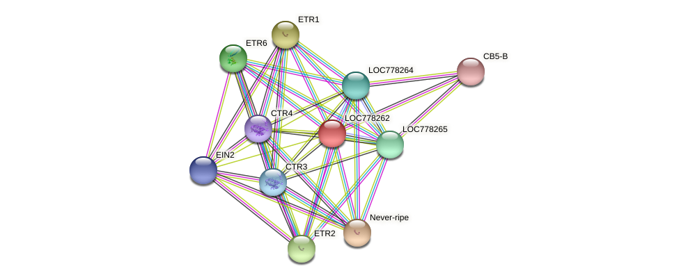 LOC778262 protein (Solanum lycopersicum) - STRING interaction network