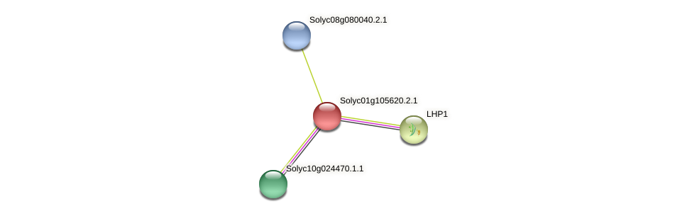 Solyc01g105620.2.1 protein (Solanum lycopersicum) - STRING interaction network