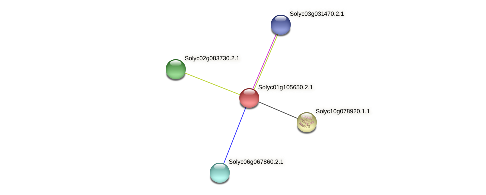 Solyc01g105650.2.1 protein (Solanum lycopersicum) - STRING interaction network