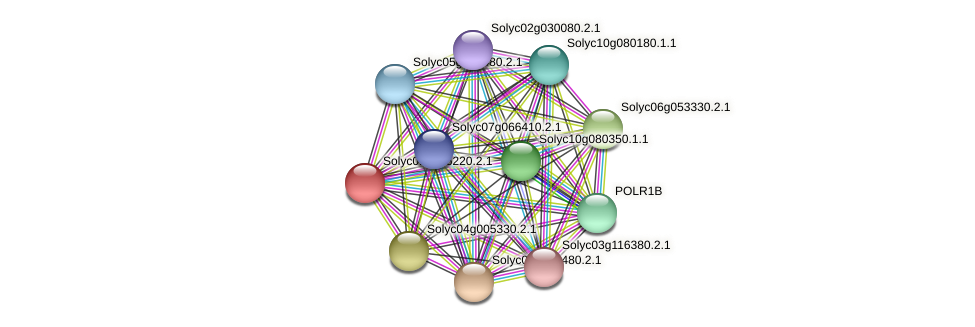 Solyc01g106220.2.1 protein (Solanum lycopersicum) - STRING interaction network