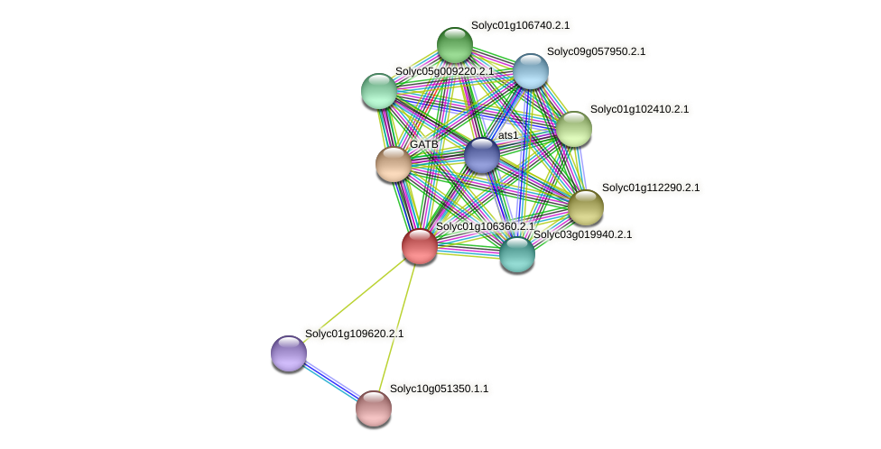 Solyc01g106360.2.1 protein (Solanum lycopersicum) - STRING interaction network