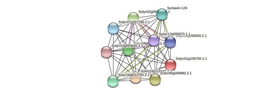 101253436 protein (Solanum lycopersicum) - STRING interaction network