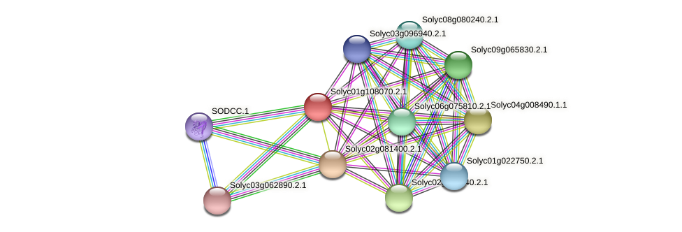Solyc01g108070.2.1 protein (Solanum lycopersicum) - STRING interaction network