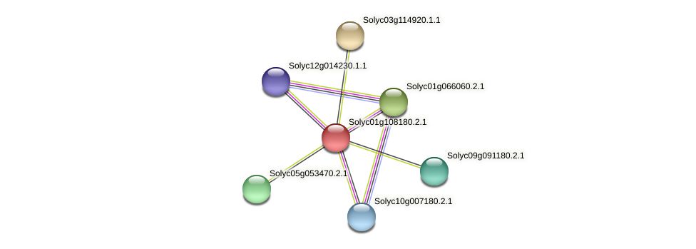 Solyc01g108180.2.1 protein (Solanum lycopersicum) - STRING interaction network