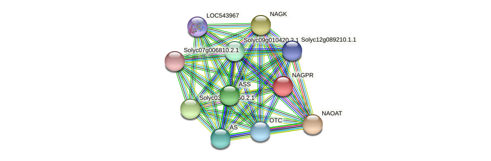 NAGPR protein (Solanum lycopersicum) - STRING interaction network